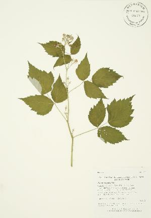 ( - AP106)  @11 [ ] Copyright (2009) Unspecified University of Guelph BIO Herbarium