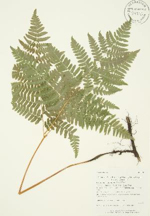 ( - AP114)  @11 [ ] Copyright (2009) Unspecified University of Guelph BIO Herbarium