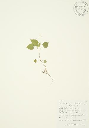 ( - AP137)  @11 [ ] Copyright (2009) Steven Newmaster University of Guelph BIO Herbarium