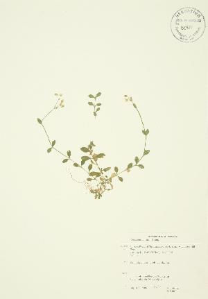 ( - JAG 0034)  @11 [ ] Copyright (2009) Steven Newmaster University of Guelph BIO Herbarium