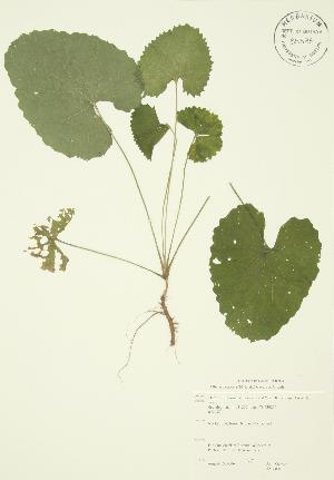 ( - JAG 0018)  @11 [ ] Copyright (2009) Steven Newmaster University of Guelph BIO Herbarium
