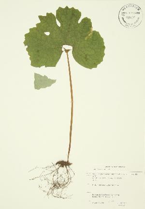 ( - JAG 0021)  @11 [ ] Copyright (2009) Steven Newmaster University of Guelph BIO Herbarium
