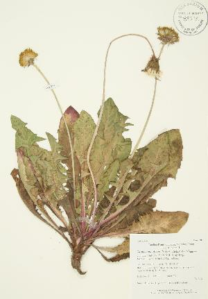 ( - AP239)  @11 [ ] Copyright (2009) Steven Newmaster University of Guelph BIO Herbarium