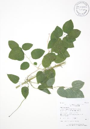 ( - AP312)  @11 [ ] Copyright (2009) Unspecified University of Guelph BIO Herbarium