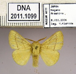 (Malacosoma neustria testaceum - 2011.1099)  @13 [ ] Unspecified (default): All Rights Reserved  2011.1099 Unspecified