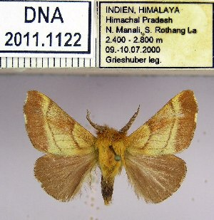 (Malacosoma indicum - 2011.1122)  @15 [ ] Unspecified (default): All Rights Reserved  2011.1122 Unspecified