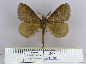 (Dendrolimus vulpina - 2011.303)  @14 [ ] Unspecified (default): All Rights Reserved  Unspecified Unspecified