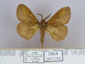 (Dendrolimus punctata pr - 2011.312)  @15 [ ] Unspecified (default): All Rights Reserved  Unspecified Unspecified