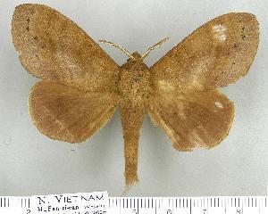 (Dendrolimus grisea - LAS-DR 36)  @15 [ ] Unspecified (default): All Rights Reserved  Unspecified Unspecified