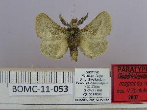 (Chondrosteginae - BOMBC-11-053)  @15 [ ] Unspecified (default): All Rights Reserved  Unspecified Unspecified
