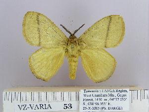 (Dendrolimus monticola Laj - 06455-2010-15)  @15 [ ] Unspecified (default): All Rights Reserved  Unspecified Unspecified