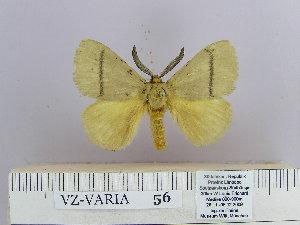 (Dendrolimus tabulaeformis - 06455-2010-18)  @14 [ ] Unspecified (default): All Rights Reserved  Unspecified Unspecified