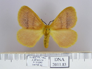 (Striphnopteryginae - 2011.83)  @14 [ ] Unspecified (default): All Rights Reserved  Unspecified Unspecified