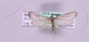 (Nematopogon stenochlora - MM19749)  @14 [ ] No Rights Reserved (2011) Marko Mutanen University of Oulu