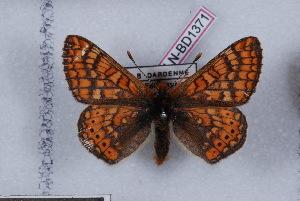 ( - LN-BD1371)  @13 [ ] Copyright (2011) Bernard Dardenne Research Collection of Bernard Dardenne