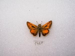 ( - MACN-Bar-Lep-ct 01461)  @12 [ ] Copyright (2011) MACN Museo Argentino de Ciencias Naturales