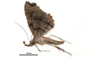 (Microselene - BIOUG13431-B01)  @11 [ ] CreativeCommons - Attribution Non-Commercial Share-Alike (2014) BIO Photography Group Biodiversity Institute of Ontario