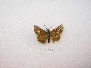 ( - MACN-Bar-Lep-ct 03139)  @12 [ ] Copyright (2012) MACN Museo Argentino de Ciencias Naturales