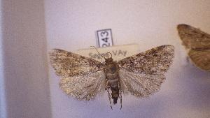 ( - LepVM346)  @11 [ ] Creative Commons – Attribution Non-Commercial Share-Alike (2014) NTNU University Museum, Department of Natural History NTNU University Museum, Department of Natural History