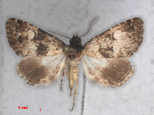 (Iranada - RMNH.5010070)  @11 [ ] CreativeCommons Attribution Non-Commercial Share-Alike (2014) Unspecified Naturalis, Biodiversity Centre