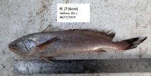 (Panna - LQDWL-TIS-30-12-2013-027)  @11 [ ] Copyright (2014) Guarat Biodiversity Gene Bank, GSBTM, DST, GoG Guarat Biodiversity Gene Bank, GSBTM, DST, GoG