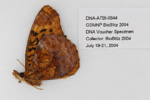 ( - DNA-ATBI-0844)  @13 [ ] CreativeCommons - Attribution Non-Commercial Share-Alike (2010) Unspecified Biodiversity Institute of Ontario