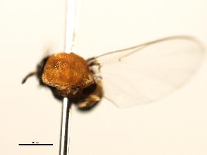 (Simulium lutzianum s.l - SIM-CANADA-505)  @12 [ ] CreativeCommons - Attribution Non-Commercial Share-Alike (2009) CBG Photography Group Centre for Biodiversity Genomics