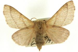 (Malacosoma incurvum incurvum - CCDB-19575-C12)  @14 [ ] CreativeCommons - Attribution Non-Commercial Share-Alike (2012) BIO Photography Group Biodiversity Institute of Ontario