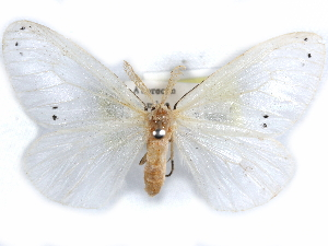 (Pirgula - CCDB-29457-A02)  @11 [ ] CreativeCommons - Attribution Non-Commercial Share-Alike (2017) CBG Photography Group Centre for Biodiversity Genomics