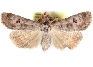(Eccrita - CCDB-29481-E06)  @11 [ ] CreativeCommons - Attribution Non-Commercial Share-Alike (2017) CBG Photography Group Centre for Biodiversity Genomics