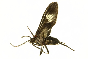 (Heterodontia - BIOUG00729-E07)  @13 [ ] CreativeCommons - Attribution Non-Commercial Share-Alike (2011) BIO Photography Group Biodiversity Institute of Ontario