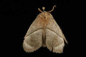 (Praesusica - Moth 061.03CC)  @14 [ ] CreativeCommons - Attribution Non-Commercial Share-Alike (2010) BIO Photography Group Biodiversity Institute of Ontario