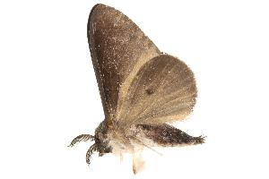 (Lymantria minora - BIOUG12317-G02)  @14 [ ] CreativeCommons - Attribution Non-Commercial Share-Alike (2015) CBG Photography Group Centre for Biodiversity Genomics