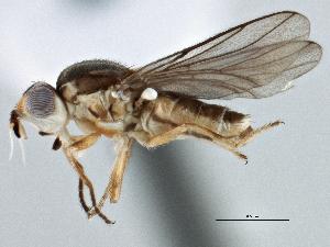 (Parectecephala - CCDB-21329-C12)  @11 [ ] CreativeCommons - Attribution Non-Commercial Share-Alike (2014) BIO Photography Group Biodiversity Institute of Ontario