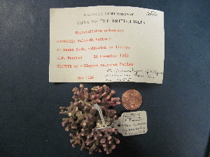 ( - Phymatolithon calcareum neotype)  @11 [ ] Unspecified (default): All Rights Reserved  Unspecified Unspecified