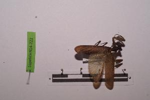 (Panurgica - LopeMAN14-222)  @13 [ ] by-nc-sa (2014) Nicolas Moulin Nicolas Moulin entomologie