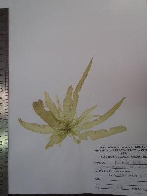 ( - Croce_457)  @11 [ ] CreativeCommons - Attribution Non-Commercial (2013) Unspecified Universidad Nacional del Sur