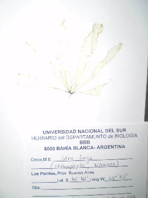 ( - Croce_463)  @11 [ ] CreativeCommons - Attribution Non-Commercial (2013) Unspecified Universidad Nacional del Sur