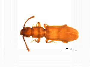 ( - MASGI-0285)  @11 [ ] CreativeCommons - Attribution Non-Commercial Share-Alike (2014) Muhammad Ashfaq Biodiversity Institute of Ontario