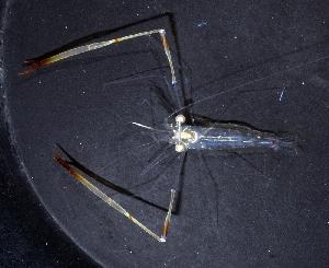(Palaemonidae - MBIO3914.1)  @16 [ ] Unspecified (default): All Rights Reserved  Unspecified Unspecified