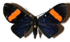 (Esthemopsis pherephatte - 01-SRNP-2685)  @14 [ ] CreativeCommons - Attribution Non-Commercial Share-Alike (2005) Daniel H. Janzen Guanacaste Dry Forest Conservation Fund