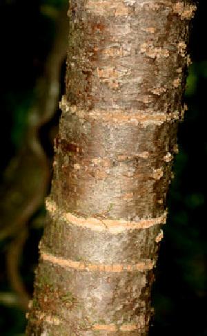 (Euphorbia schlechtendalii - BioBot01113)  @11 [ ] CreativeCommons - Attribution Non-Commercial Share-Alike (2010) Daniel H. Janzen Guanacaste Dry Forest Conservation Fund