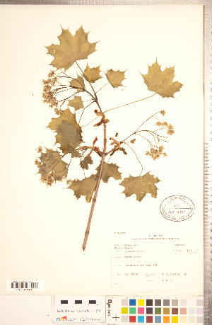( - CCDB-20333-D06)  @11 [ ] © (2014) Deb Metsger Royal Ontario Museum
