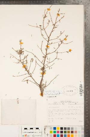 ( - CCDB-18346-A09)  @11 [ ] Copyright (2015) Deb Metsger Royal Ontario Museum