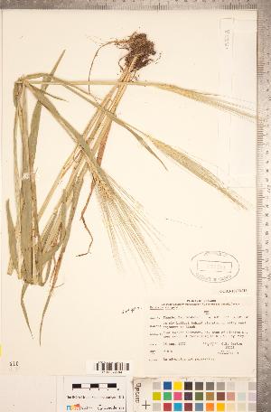 ( - CCDB-18290-H06)  @11 [ ] Copyright (2015) Deb Metsger Royal Ontario Museum