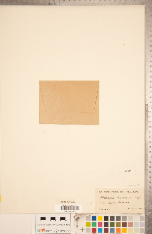 (Stellaria dicranoides - CCDB-18302-A01)  @11 [ ] Copyright (2015) Deb Metsger Royal Ontario Museum