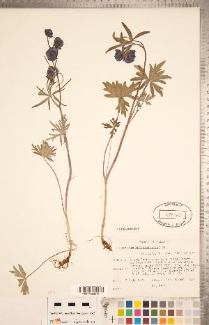 (Aconitum - CCDB-18302-F11)  @11 [ ] Copyright (2015) Deb Metsger Royal Ontario Museum