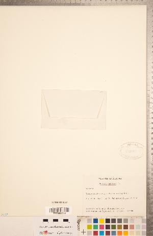 (Crassula aquatica - CCDB-18313-H08)  @11 [ ] Copyright (2015) Deb Metsger Royal Ontario Museum