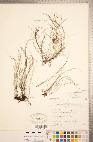(Podostemaceae - CCDB-18313-G10)  @11 [ ] Copyright (2015) Deb Metsger Royal Ontario Museum