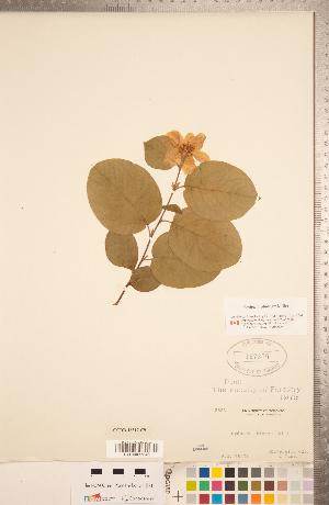 (Cydonia - CCDB-18317-C09)  @11 [ ] Copyright (2015) Deb Metsger Royal Ontario Museum